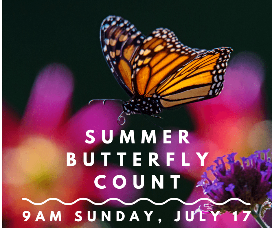 Summer Butterfly Count