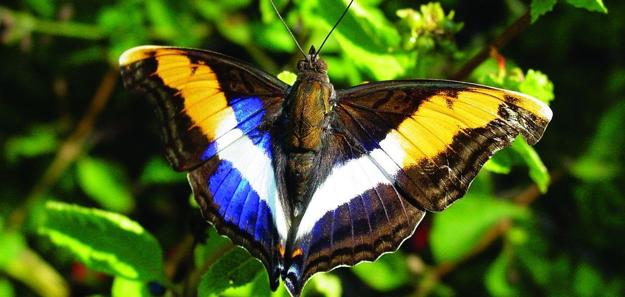 National Butterfly Center - National Butterfly Center ...